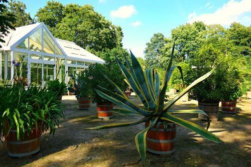 garden orangery greenhouse