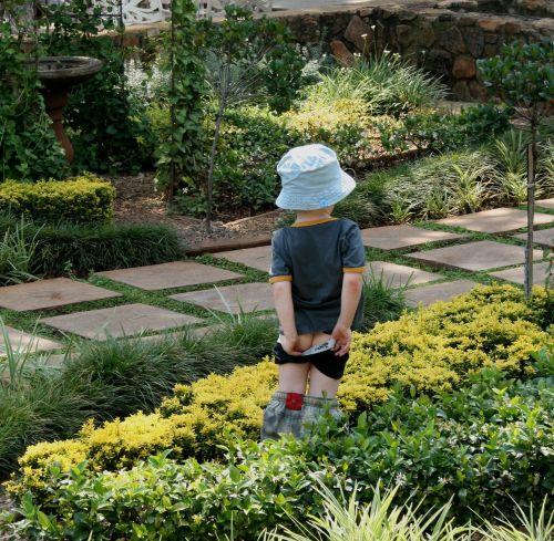 garden green shrubs