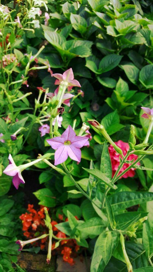 garden flowers green