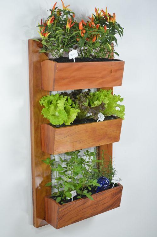 sodas,vertikalus sodas,sodininkystė,dekoratyvinis,architektūra,vertikalus,žalias,augalas,gėlė,Žemdirbystė