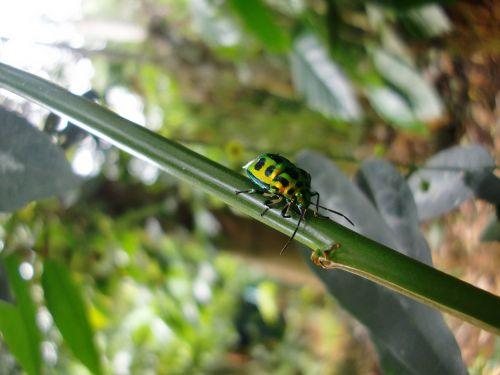 garden macro beetle