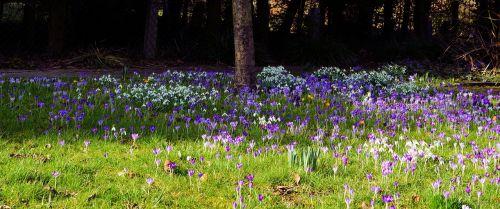 garden spring early bloomer