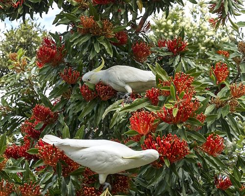 garden birds nature