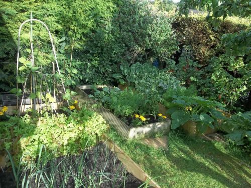 garden vegetables produce