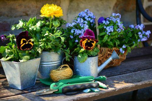 garden flowers plant flowers