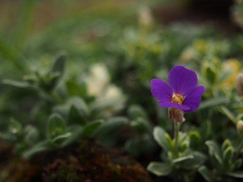 garden blooming flowers flower