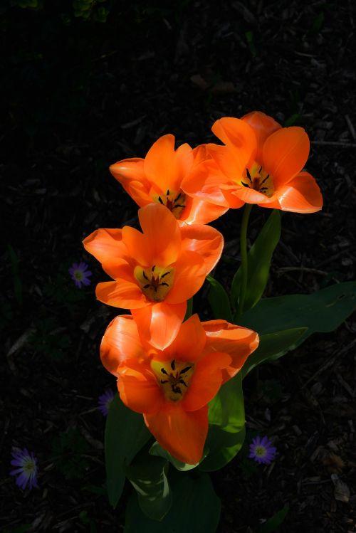 garden botany flower