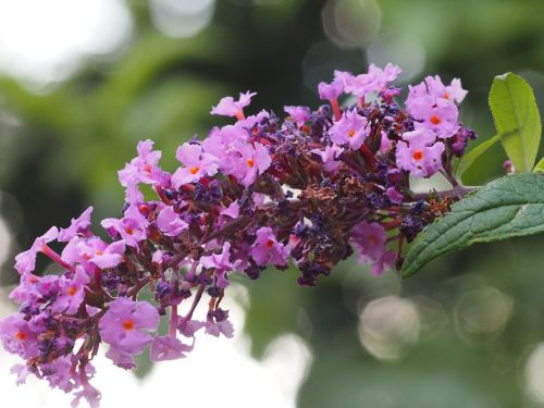 garden flower summer