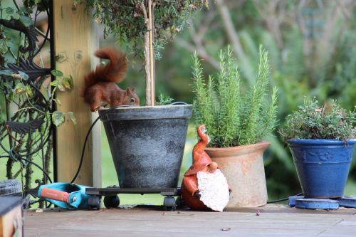 garden squirrel rodent