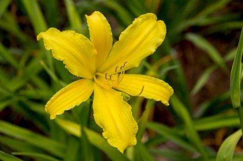 garden flowers beauty