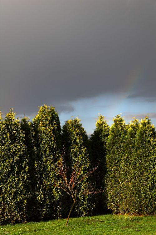 garden tree dark