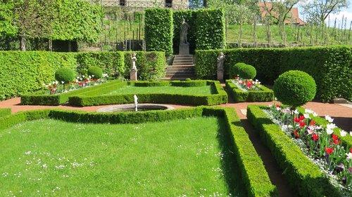 garden  rush  grass