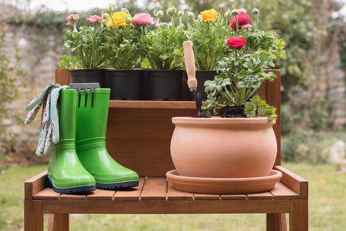 garden  flower  flower pot