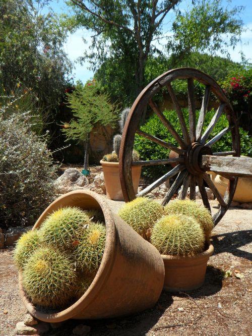 garden cactus picturesque