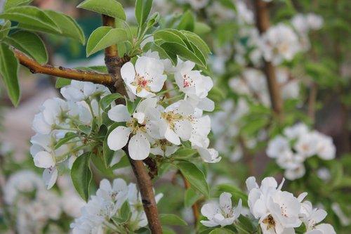 garden  bloom  flower