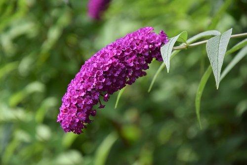 garden  summer  flowers