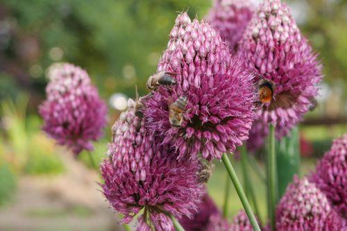 garden flower bee