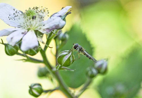 garden  plant  close up