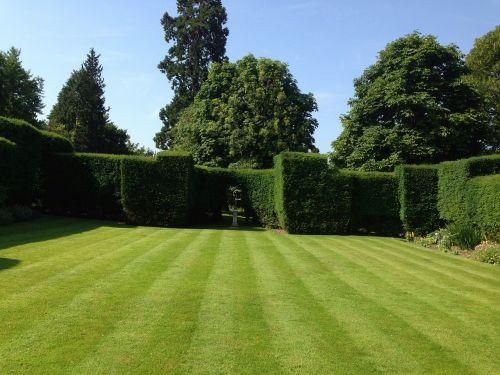 garden lawn grass