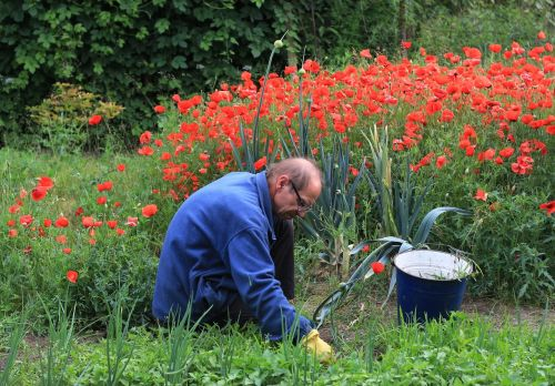 garden work weeding