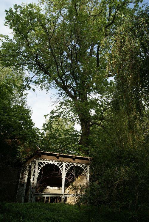 garden tree trees