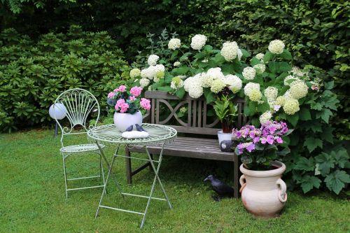 garden flowers summer