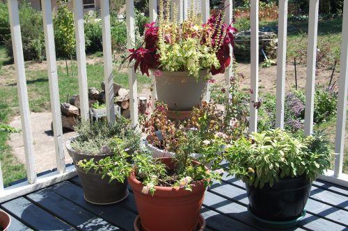 garden flowers deck contrasts