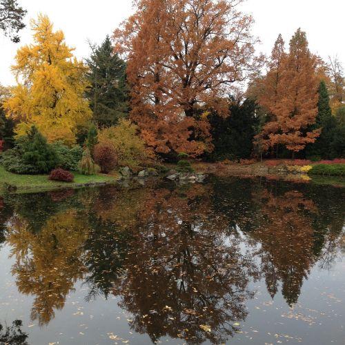 garden japanese wrocław