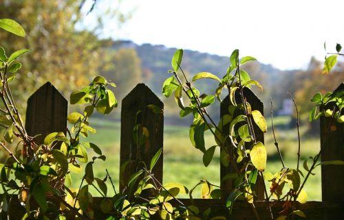 garden fence fence autumn