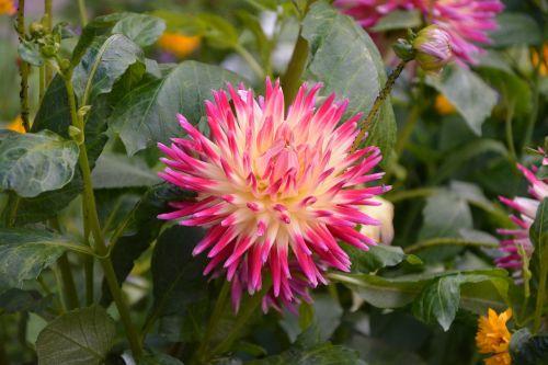 garden flowers massif plant