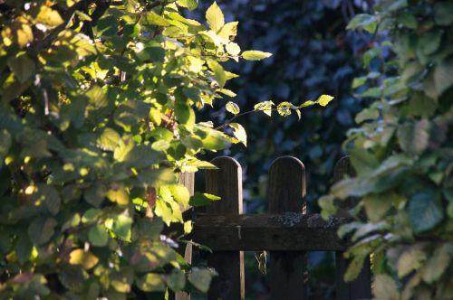 garden gate neighbor hedge