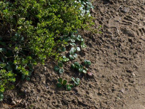 Garden Plants And Dirt