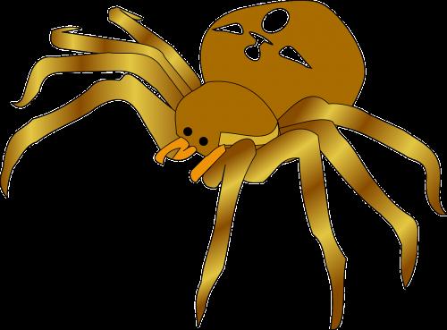 garden spider spider brown