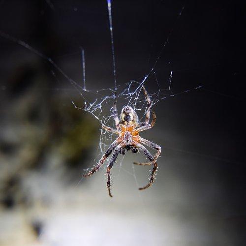 garden spider  cobweb  spider