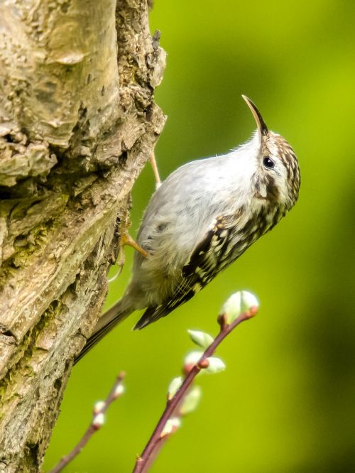 garden tree runner tree runner bird