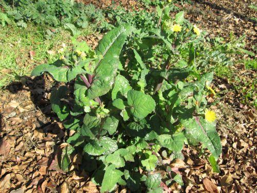 Garden Weed 2