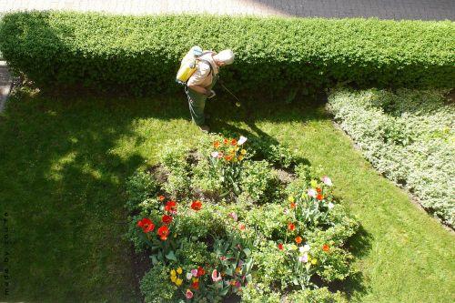 gardener garden gardening