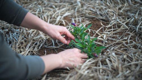 sodininkystė,augalas,sodas,gamta,sodininkas,moteris,kiemas,galinis kiemas,lauke
