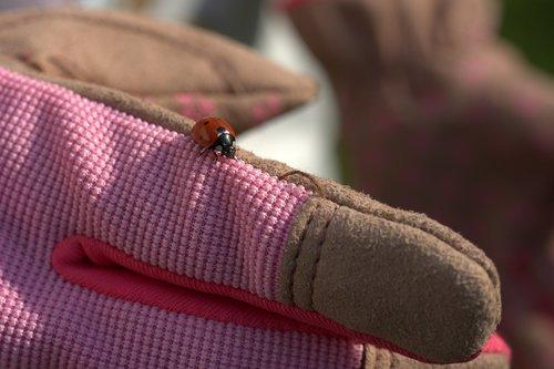 gardening  ladybug  glove