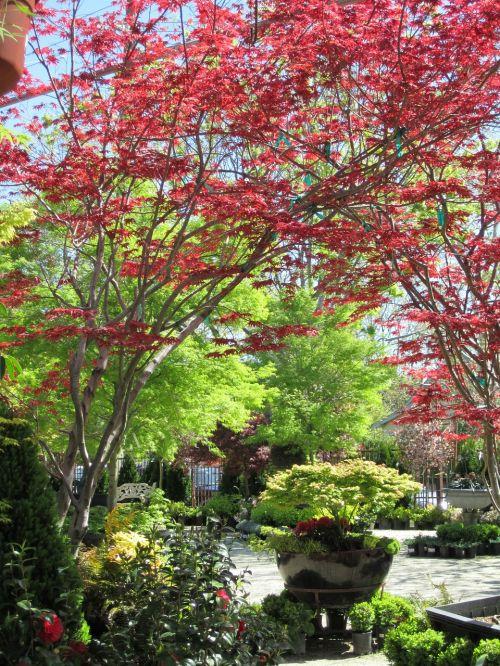 gardens trees autumn