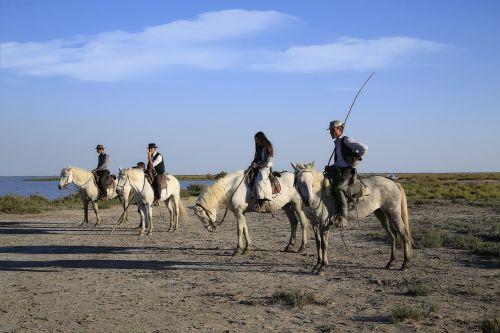 gardian horse horses