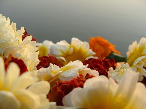 garland flowers nature