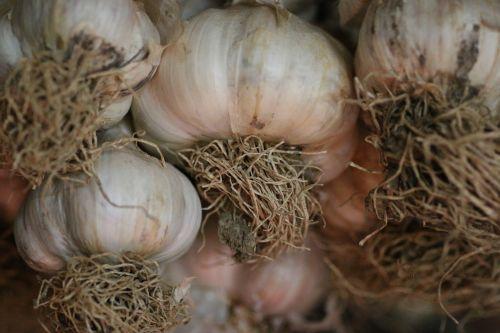 garlic condiment kitchen