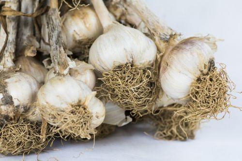 garlic heads of garlic condiment