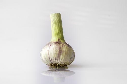garlic head of garlic violet