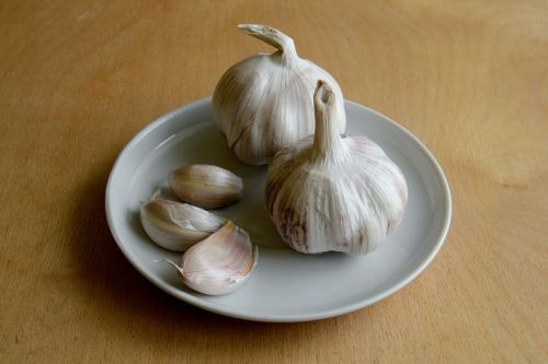 garlic antibiotic flu