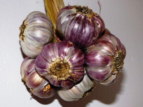 garlic kitchen spice