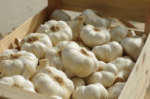 garlic garlic white food