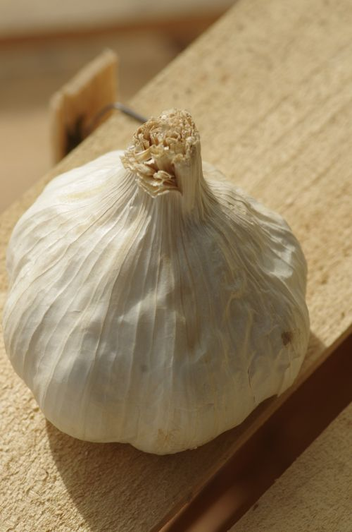 garlic garlic white food