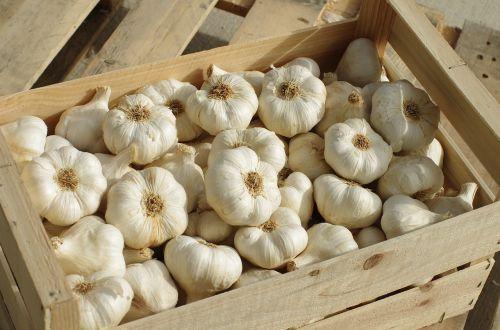 garlic garlic white vegetable